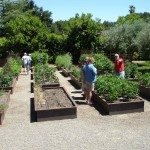 Raised Beds - Corten