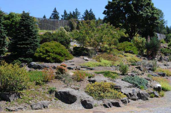 A rock Garden in July