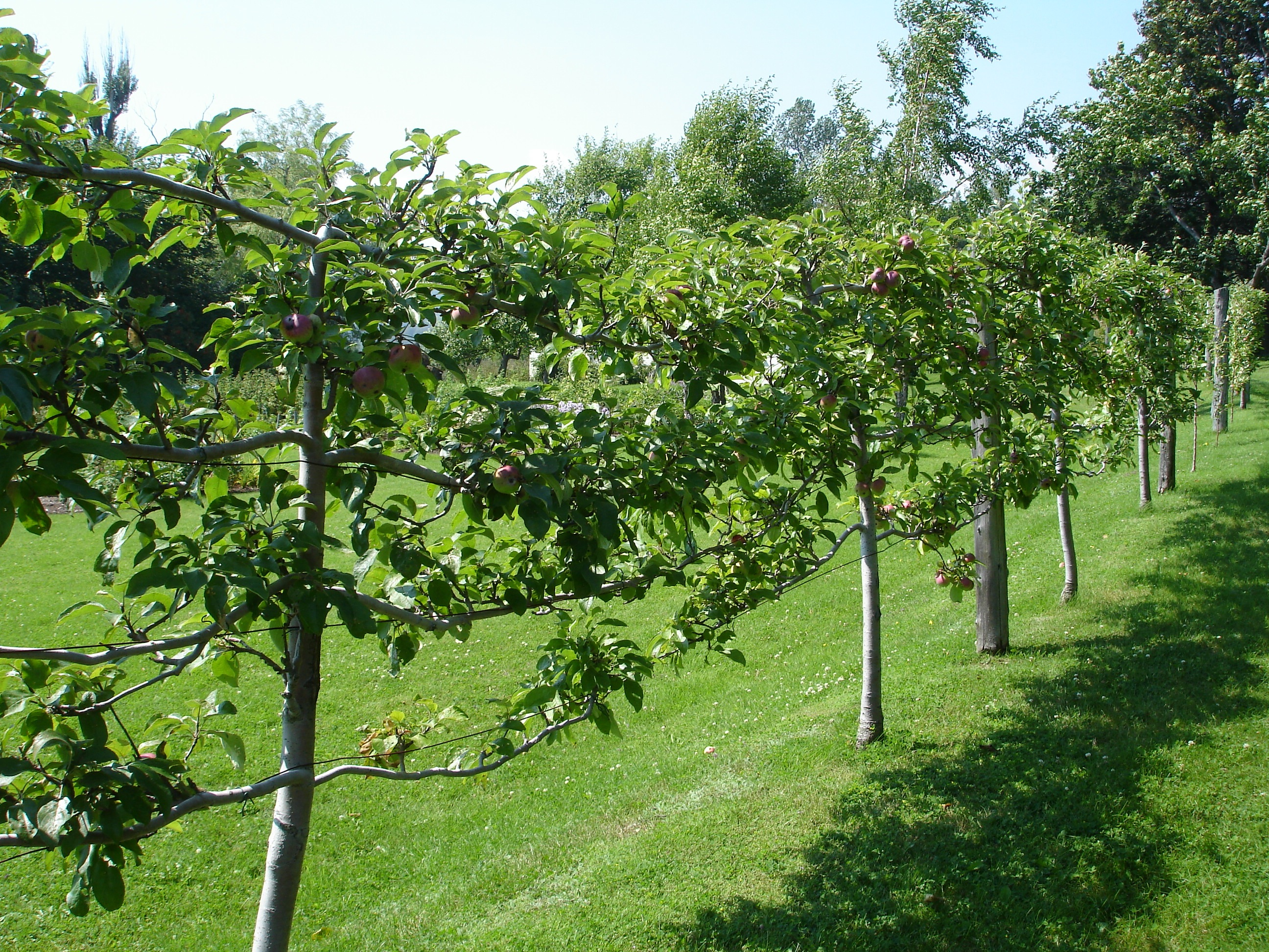 Edible plants for Small garden trees for sale